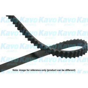 KAVO PARTS DTB-5519 Timing belt